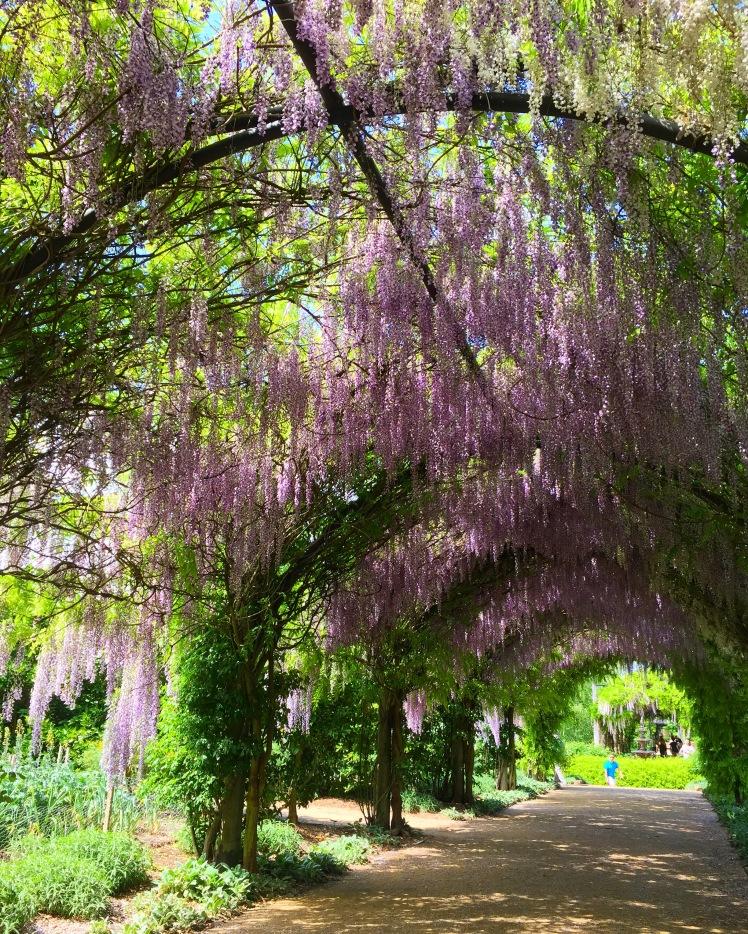 Alowyn Gardens 3